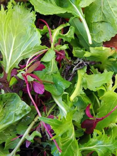 Baby Greens - Find Fresh Farm Markets and Groceries in NJ