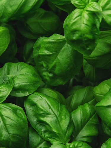 Basil - Find Fresh Farm Markets and Groceries in NJ