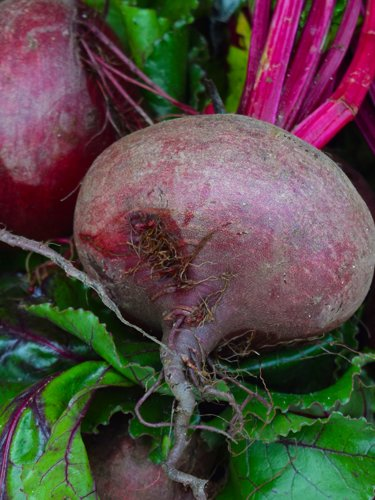 Beets - Find Fresh Farm Markets and Groceries in NJ