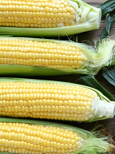 Corn - Find Fresh Farm Markets and Groceries in NJ