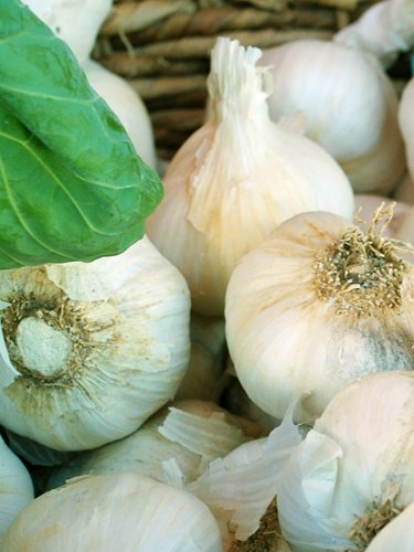 Garlic - Find Fresh Farm Markets and Groceries in NJ
