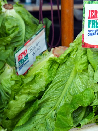Lettuce - Find Fresh Farm Markets and Groceries in NJ