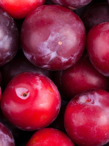Plums - Find Fresh Farm Markets and Groceries in NJ