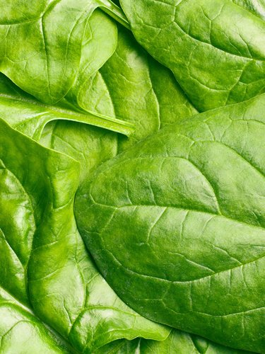 Spinach - Find Fresh Farm Markets and Groceries in NJ