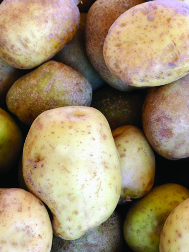 Potatoes - Find Fresh Farm Markets and Groceries in NJ