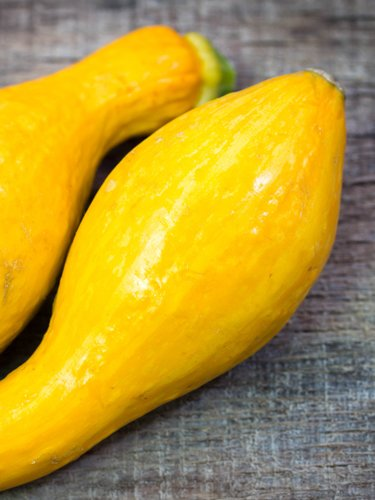 Yellow Squash - Find Fresh Farm Markets and Groceries in NJ