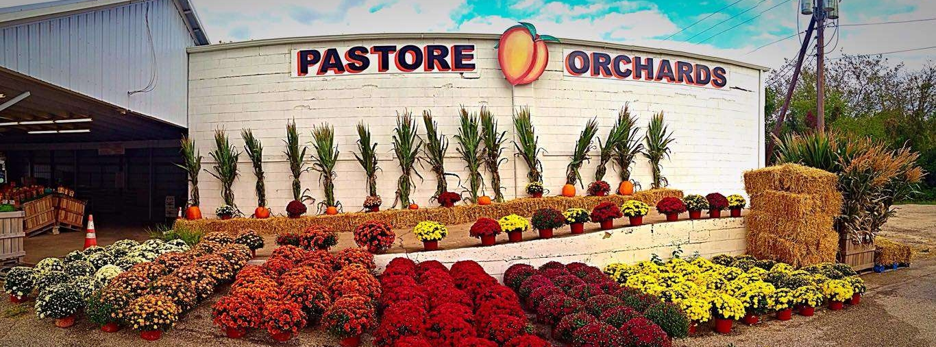 pastore-orchards